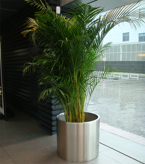 FO-9003 Stainless Steel Cylinder Planter
